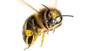 Windahm County Beekeepers Meeting