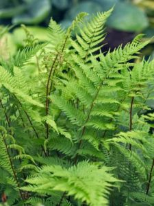 Learn about Ferns